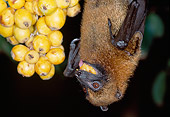 WLD 27 MH0004 01