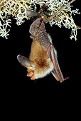WLD 27 WF0003 01
