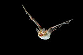 WLD 27 WF0004 01
