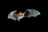 WLD 27 WF0005 01