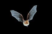 WLD 27 WF0006 01