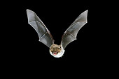 WLD 27 WF0013 01