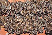 WLD 27 WF0019 01