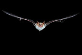 WLD 27 WF0022 01