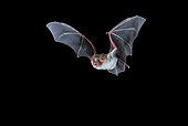 WLD 27 WF0023 01