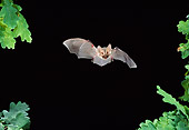 WLD 27 WF0025 01