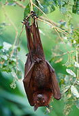 WLD 27 WF0026 01