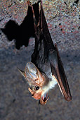 WLD 27 KH0001 01