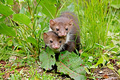 WLD 28 GL0001 01
