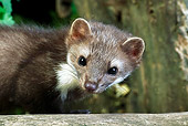 WLD 28 GL0002 01