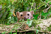 WLD 28 GL0003 01