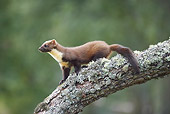 WLD 28 WF0001 01