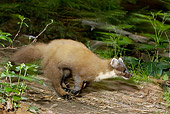 WLD 28 WF0003 01