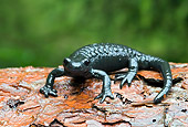 WLD 29 WF0001 01