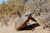 WLD 30 WF0003 01
