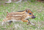 WLD 31 WF0004 01