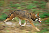 WOV 07 TL0001 01