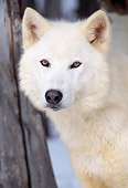 WOV 08 LS0002 01