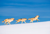 WOV 08 RW0001 01