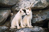 WOV 08 RW0003 01