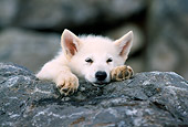 WOV 08 RW0004 01