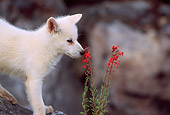 WOV 08 RW0005 01