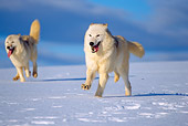 WOV 08 TL0001 01