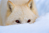 WOV 08 TL0010 01