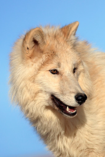WOV 09 AC0015 01