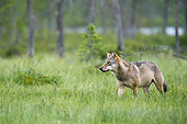 WOV 09 AC0020 01
