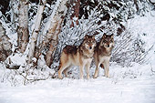 WOV 09 BA0001 01