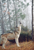 WOV 09 BA0002 01