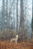 WOV 09 BA0004 01