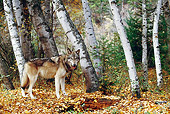 WOV 09 BA0006 01