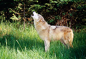 WOV 09 BA0009 01