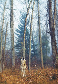 WOV 09 BA0010 01