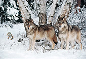 WOV 09 BA0011 01