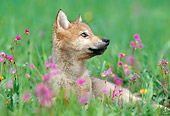 WOV 09 KH0056 01