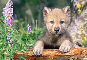 WOV 09 KH0057 01
