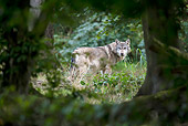 WOV 09 KH0058 01