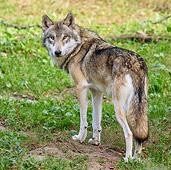 WOV 09 KH0059 01