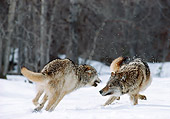 WOV 09 MC0001 01