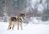 WOV 09 MC0003 01