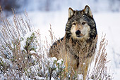 WOV 09 MC0006 01