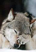WOV 09 MC0009 01