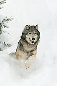 WOV 09 NE0031 01