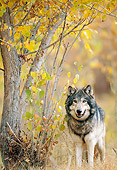 WOV 09 NE0034 01