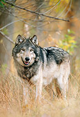 WOV 09 NE0035 01