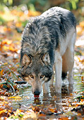 WOV 09 NE0039 01