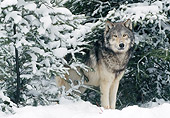 WOV 09 NE0045 01